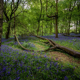 Fallen amongst the forest by Chris Barnes - Landscapes Forests ( canon, 550d, foxholes, oxfordshire, forest, landscape )