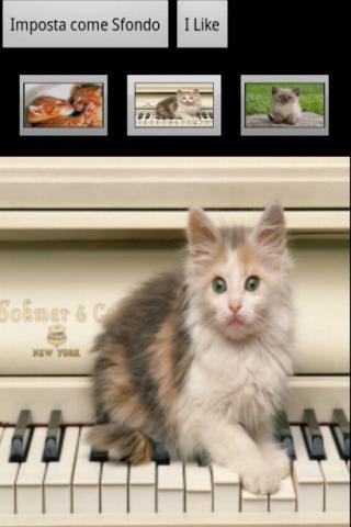 Miao Gattini - Gratis