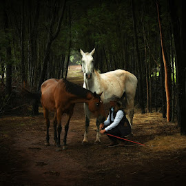 The Horse Whisperer by Pierre Vee - Digital Art Animals ( farm, horse, bush, lady,  )