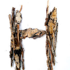 Hardwood by Linaee Hultquist - Typography Single Letters ( wood, nature, letter, font, bark, alphabet, h )