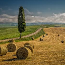 Field in summer by Igor Debevec - Landscapes Prairies, Meadows & Fields