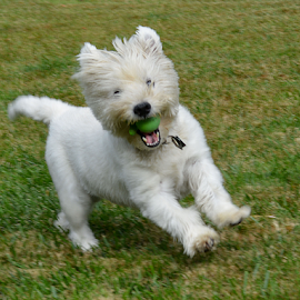 Happy Jake by Jeanne Knoch - Animals - Dogs Playing