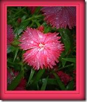 5-08 flower
