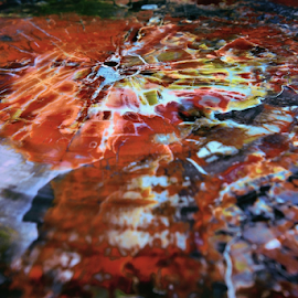 Petrified wood by Dejan Gavrilovic - Abstract Patterns ( petrified wood )
