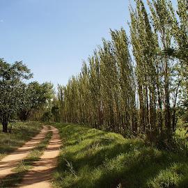 Lonely Road by Hennie Wolmarans - Landscapes Prairies, Meadows & Fields ( green, dirt road, trees, road, landscape )