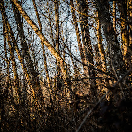 by James Boorn - Landscapes Forests
