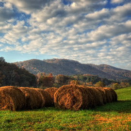 Western North Carolina Hay Field by Greg Mimbs - Landscapes Prairies, Meadows & Fields ( clouds, grass, green, white, brasstown, greg mimbs, wnc, western north carolina, mountains, sky, hay field, nc, blue, fall, trees, golden )