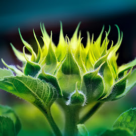 Green Volcano by Pronab Kundu - Nature Up Close Gardens & Produce ( macro, flowewr,  )