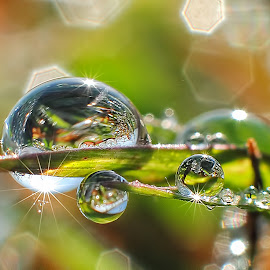 tree dew by Wahyu Budiyanto Toak - Nature Up Close Natural Waterdrops