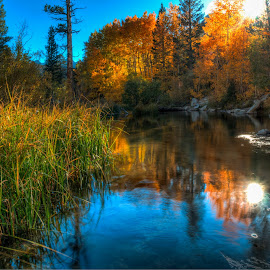 Up on Bishop Creek of the Eastern Sierra Nevada, California by Beau Rogers - Landscapes Forests ( reflection, bishop, eastern sierra, bishop creek, backlighting, tall grass, fall color )