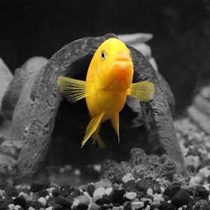 KenyeFish.jpg
