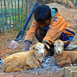A poor lone boy with two baby goat friends in a cold winter by Asif Bora - Babies & Children Children Candids ( , Travel, People, Lifestyle, Culture )