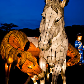 Lanterns of horses  by Foo Fok - Artistic Objects Other Objects