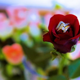 Rings on the Rose by Irfaan Hussein - Wedding Details ( rose, red, rings, wedding rings, flower )