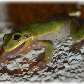 Froggy Friend by Kristen Dustin - Animals Amphibians ( nature, frog, nature close up, fun, outside )