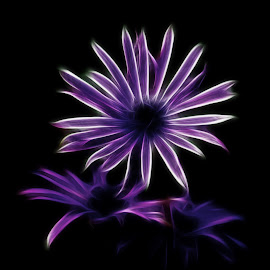 Pink by Stefania Loriga - Abstract Light Painting ( white, dark, pink, black, flower,  )