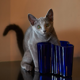 Surprise by Pauli Araneva - Animals - Cats Kittens ( vase, russian blue, cat )