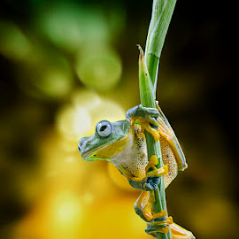 The Pose by Dikky Oesin - Animals Amphibians