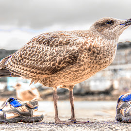 Sun ,sandals and seagulls by Ian Flear - Artistic Objects Clothing & Accessories