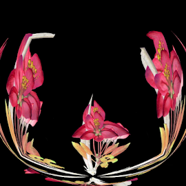 PPBK 3 by Tina Dare - Digital Art Abstract ( black background, abstract, patterns, pinks, manipulated, designs, distorted, flowers, curves, shapes )