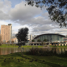 Across the River by Pamela Howard - City,  Street & Park  City Parks ( sky, torrens, buildings, adelaide, skyline clouds, convention centre, city, river )