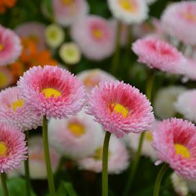 flower by Santosh Vanahalli - Flowers Flower Gardens ( flower )