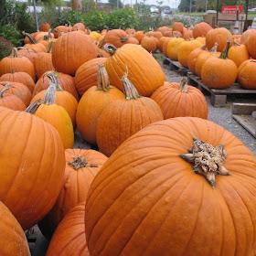 FM_Pumpkins_1.JPG