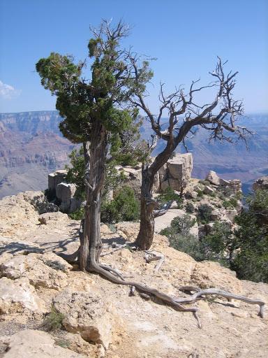 Wielki Kanion ma 349 km długości