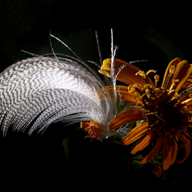 *** by Jurijs Ratanins - Instagram & Mobile Android ( mobilography, nature, light, feather, flower )