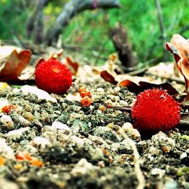 fallen arbutus... by Filipe Cardoso - Nature Up Close Gardens & Produce