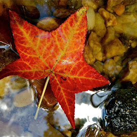 Red Star with iPhone by Tyrell Heaton - Instagram & Mobile iPhone ( red, star, leaf, iphone )