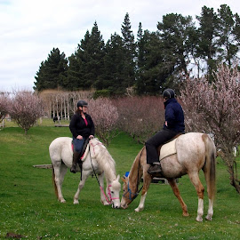 In the orchard  by Dannie Armstrong - Animals Horses ( spring.horses, women )