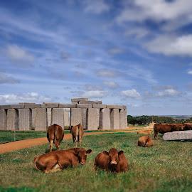 Stonehenge, built on Esperance Cattle Farm by Rizal Ismail - Buildings & Architecture Public & Historical