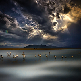 --------- by Dimitrios Lamprou - Animals Birds ( water, lagoon, d800, mesologgi, birds )