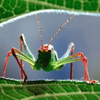 Screenshot of Insects Jigsaw Puzzles