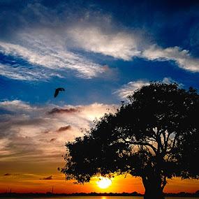 E v e n i n g B e a u t y  by MaSs Balasooriya - Landscapes Sunsets & Sunrises ( beatiful, mobilography, sky, tree, color, mobile photos, sunset, sundown, wide, alone, evening,  )