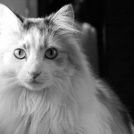 by Levi Farr - Animals - Cats Portraits