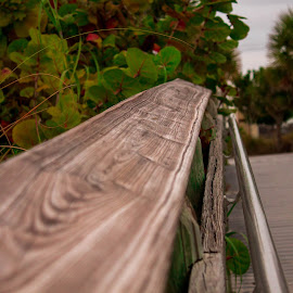 by Aires Spaethe - Nature Up Close Trees & Bushes ( plamtree, florida, tropical, eaach, trees, boardwalk )