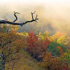 Foggy Fall Sunrise by Larry Strong - Landscapes Forests ( fog, fall, trees, morning, landscape )