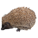 Hedgehog Sticker icon