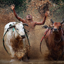 excitement jockey by Hendra Nasri - Sports & Fitness Rodeo/Bull Riding