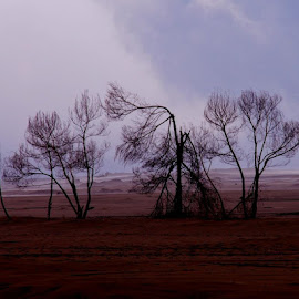 trees by Roy Rabone - Landscapes Mountains & Hills
