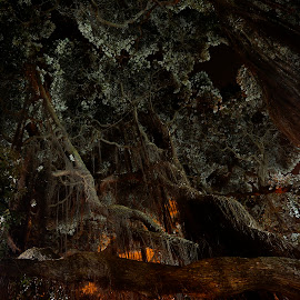 Dark hour by Milos Vasic - Nature Up Close Trees & Bushes ( wild, tree, jungle, green, dark, night, branches,  )
