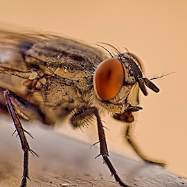 wide eye by Maffy Mamuri - Novices Only Macro