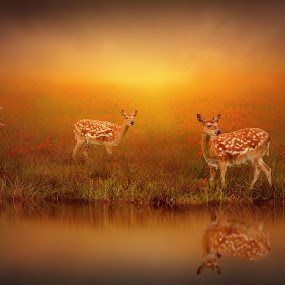 A Sound Breaks the Silence by Jennifer Woodward - Digital Art Animals ( water, animals, dawn, nature, sunset, reflections, wildlife, sunrise, landscape, dusk, deer )