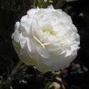 ? White flower