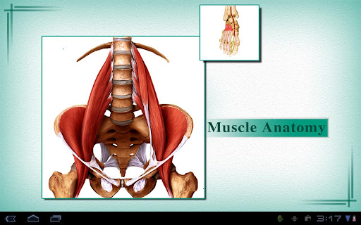 Muscles: Quick Reference