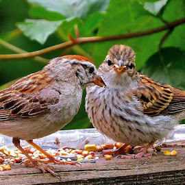 LISTEN TO YOUR MOTHER by Doug Hilson - Animals Birds ( mom & baby bird, cute, close up )