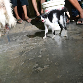 kitty vs dog by Uninstall Akal Sehat - Animals - Cats Kittens