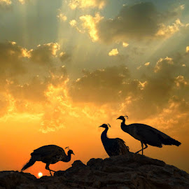 Morning Meet by Mukesh Chand Garg - Landscapes Travel